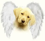 Carta de un perro a su amo [Emocionate]